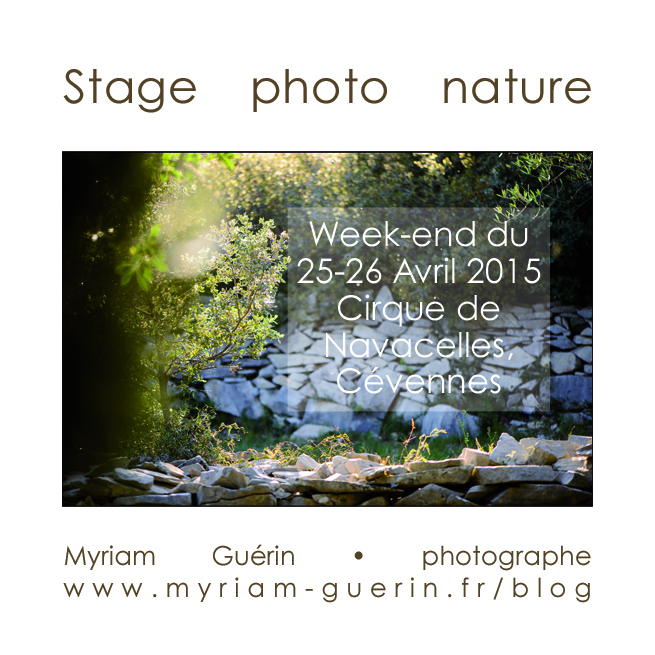 stage photo 25- 26 Avril 2015