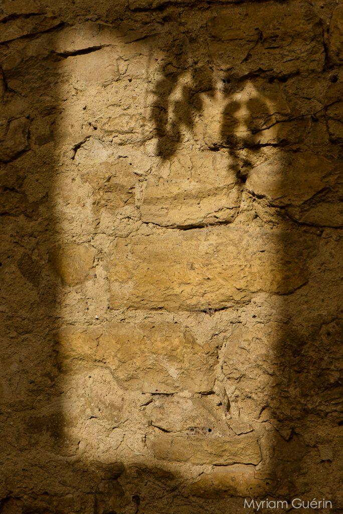 Ombre feuille sur mur en pierre soleil soir
